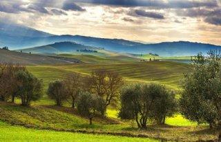 Italiaanse+olijfolie+steeds+duurder