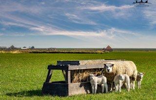 %27Let+op+houdbaarheid+ontwormingsmiddel+schapen%27