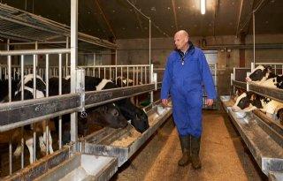 Vleeskalversector start nieuw project