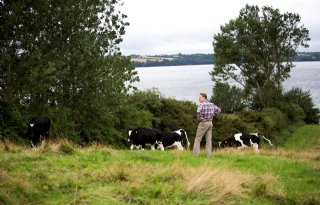 Duurzaamheidsoffensief+Deense+veehouderij