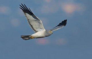Vogelakkers+op+Wadden+voor+bedreigde+soorten