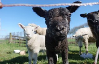 Discussie+over+gebruik+I%26amp%3BR%2Dgegevens+schapen