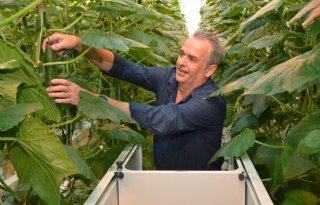 Limburgse komkommerteler stelt kas open voor publiek