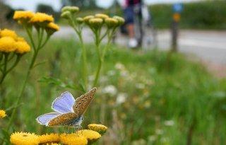 Waddenfonds+investeert+100%2E000+euro+in+biodiversiteit