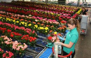 Begonia is om 'kleurenpracht' woonplant van april