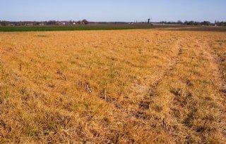 Schouten wil af van doodspuiten grasland