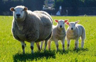 %27Sla+bij+ontwormen+gerust+wat+schapen+over%27