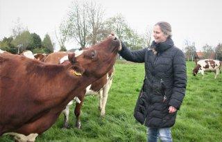 Groningse+melkveehouder+koestert+Friese+koe