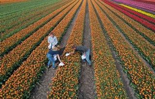 Onderbroeken+begraven+voor+bodemleventest+tulpenveld