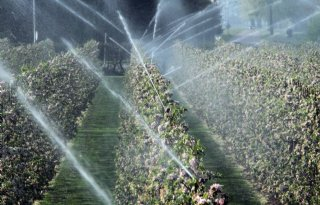 Landbouwleiding+Evides+kan+watervraag+niet+aan