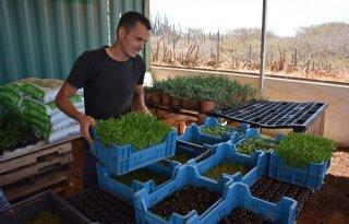 Pionieren+met+groenteteelt+op+Bonaire