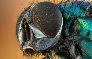 Protix+en+Agrifirm+mengen+insectenvet+in+kippenvoer