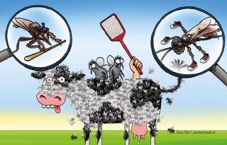 Melkveehouder+moet+actie+ondernemen+tegen+vliegen