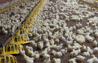 Zorgen om stagnatie daling antbioticagebruik België