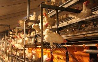 Maatregelen vogelgriep rond Altforst ingetrokken