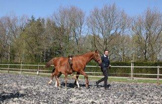 Familie Hulzebos ambieert paardenbedrijf met naam