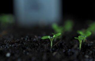 Afbeeldingsresultaat voor planten met zoutstres
