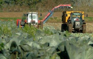 Landbouw+stabiele+factor+voor+Nederlandse+economie