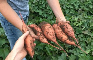 Andesgebergte+hofleverancier+biobased+gewassen