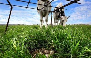 Weidevogelpopulaties+Overijssel+onder+druk