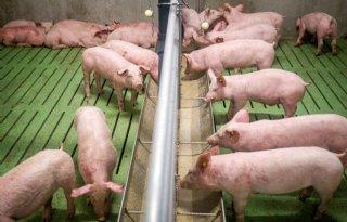 Nieuwe+normen+voor+bedrijfsbegroting+varkenshouderij