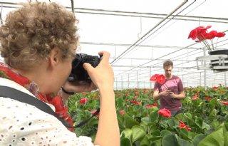 Boerenkracht toont agrarisch leven in Limburg