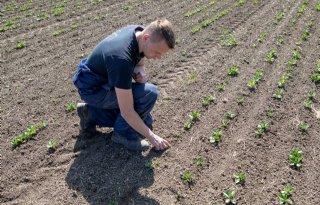 Ebelsheerd+krijgt+subsidie+voor+onderzoek+biologische+landbouw