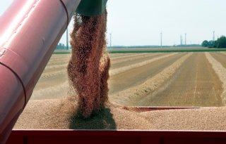 Voorraad tarwe stijgt naar recordniveau
