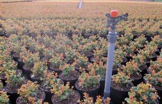 Gewasbescherming+boom%2D+en+vasteplantenteelt+verandert+snel