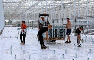 Westland+huisvest+migrant+op+tuinbouwgrond
