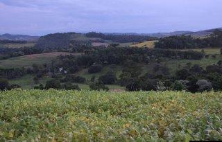 Groot+alarm+om+gebruik+pesticiden+Brazili%C3%AB