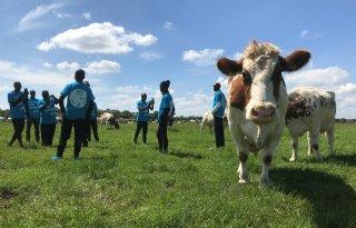 Koeien+boeien+Kenianen