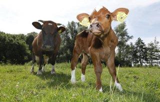 Vrijstelling voor vleesvee in wet verankerd