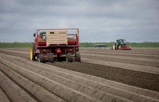 NEPG ziet areaalgroei als risico aardappelteelt