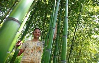 Bandus teelt driehonderd soorten bamboe