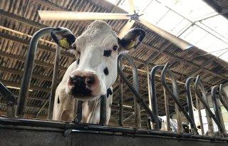 %27Zorg+voor+boer+even+belangrijk+als+voor+verwaarloosd+vee%27
