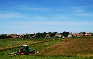 Boeren+Terschelling+beboet+tijdens+Oerol