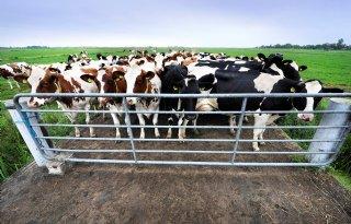 Advies+aan+boeren+Staphorst%3A+niet+oogsten+en+vee+binnen