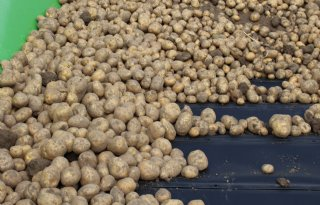 Aardappeltermijnmarkt+stijgt+naar+19+euro