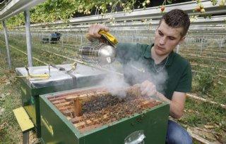 Imker+zet+honingbijen+in+voor+bestuiving