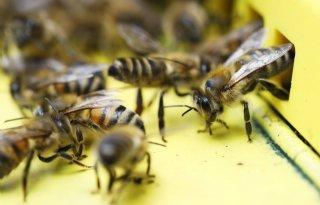 Drentse imkers ongerust na verdwijnen bijenvolken