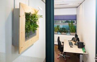 Moderne+plantensystemen+halen+fijnstof+uit+lucht