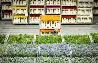 Twee+partijen+op+de+markt+voor+milieuregistratie+en+%2Dcertificering+FloraHolland