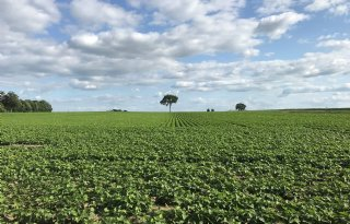 ABN+Amro+ziet+stevig+herstel+agrarische+grondstofprijzen