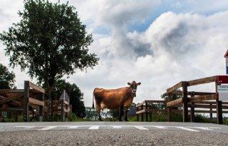 Familie+Van+der+Vis+blij+met+koeienoversteekplaats