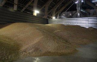Wereldvoorraad+graan+krimpt