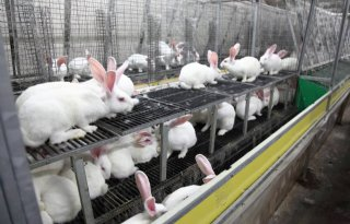Voorwaardelijke straf Vegan Streaker voor inval konijnenhouder