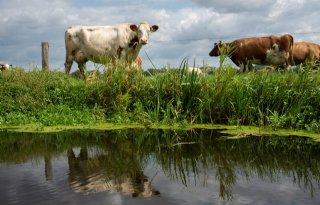 Overijssel+stelt+opkoopregeling+veehouderijen+in+januari+open
