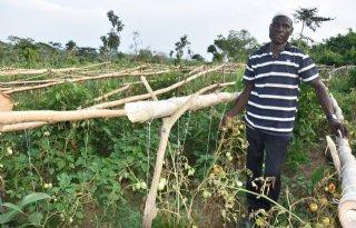SeedNL+verbetert+zaadketen+in+Afrika