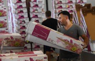 Sierteeltexport stevent af op nieuw record